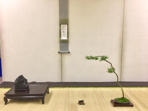 10月盆栽